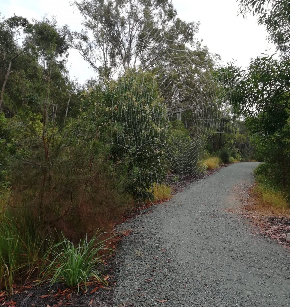 Wide gravel pathway creates a firebreak between vegetation.